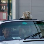 Aust Day Rusty goes for a drive