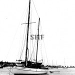 NEW SILVER GULL at Balboa 1947. SHF Coll.