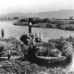 Steam tug with loaded cane barges on the Tweed River, c. 193