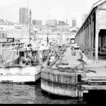 Wharf 6 Walsh Bay with fish. boats. 1983. Proof 760-27.