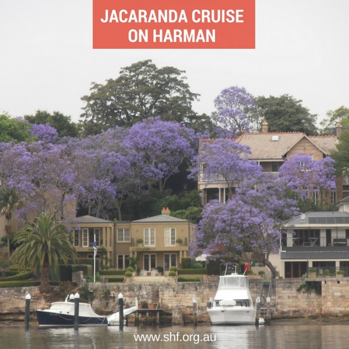 Jacaranda Cruise on Harman